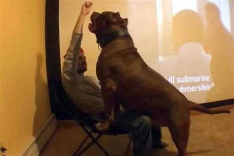 A Pit Bull of Gigantic Proportions | KLYKER