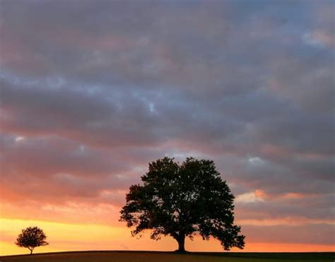 big and little trees at dusk   Several hundred pictures of